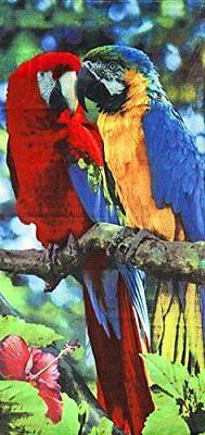 Macaws Velour Brazilian Beach Towel 30x60 Inches
